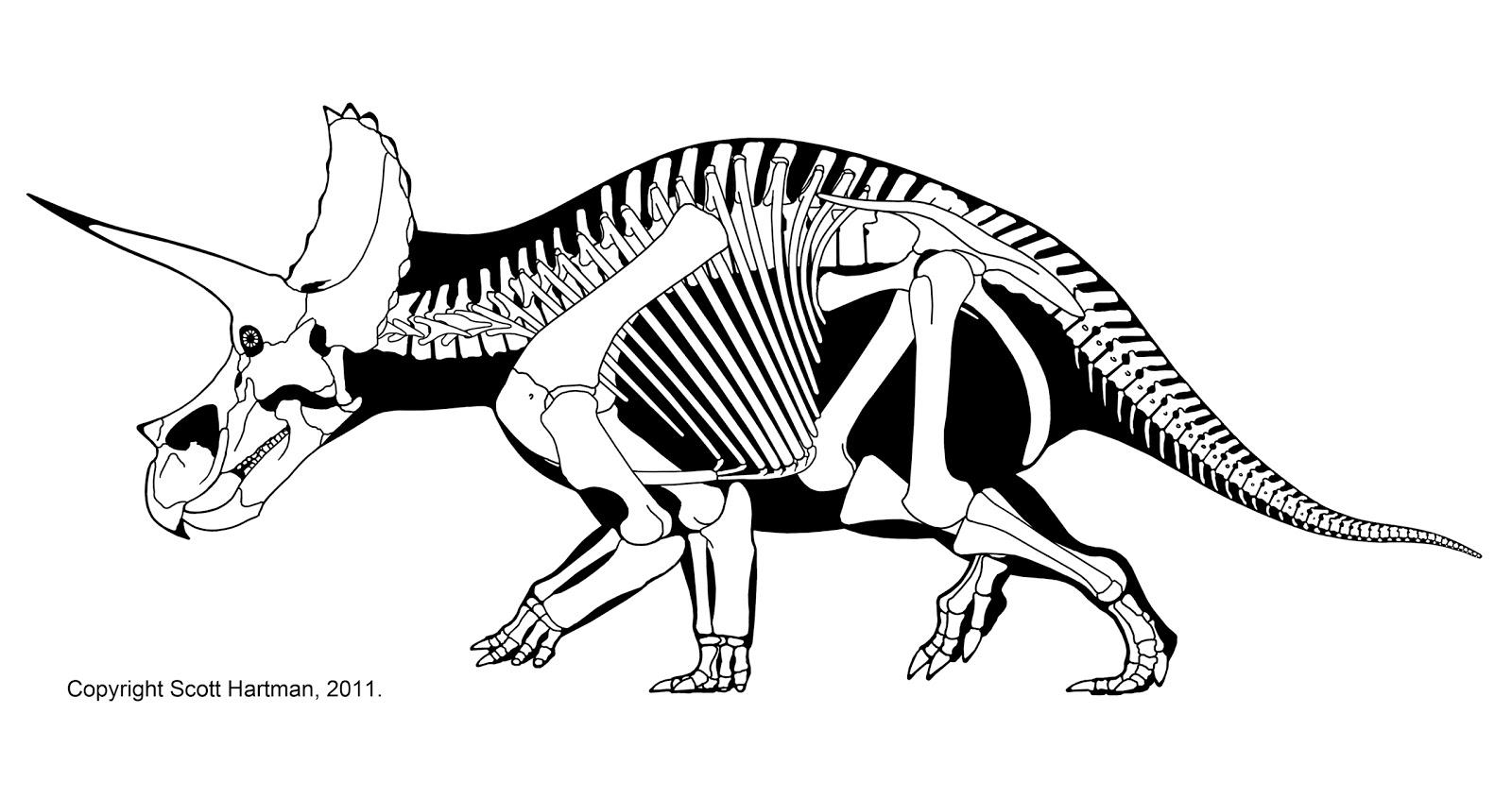triceratop filetriceratops holotypejpg triceratop