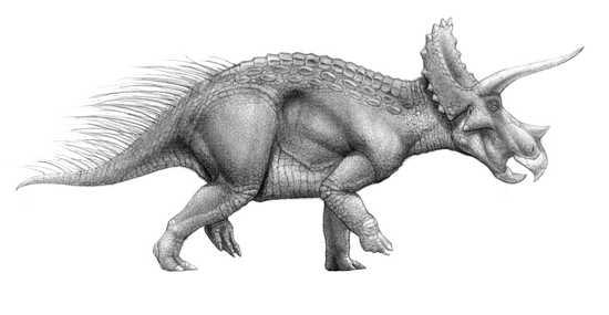 triceratop triceratops dinosaur genus britannicacom triceratop
