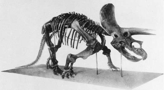 triceratop triceratops horridus by markm98 on deviantart triceratop