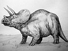 triceratop triceratops wikimedia commons triceratop