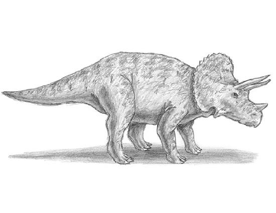 triceratop university life june 2008 triceratop