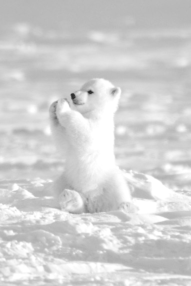 tundra animals 30 cute animals that will melt your heart ultimaterepins tundra animals