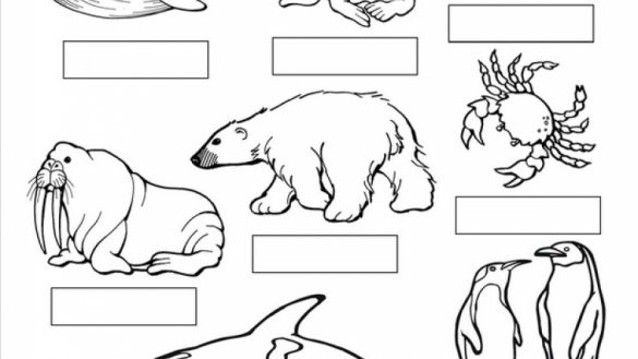 tundra animals arctic tundra pages coloring pages animals tundra