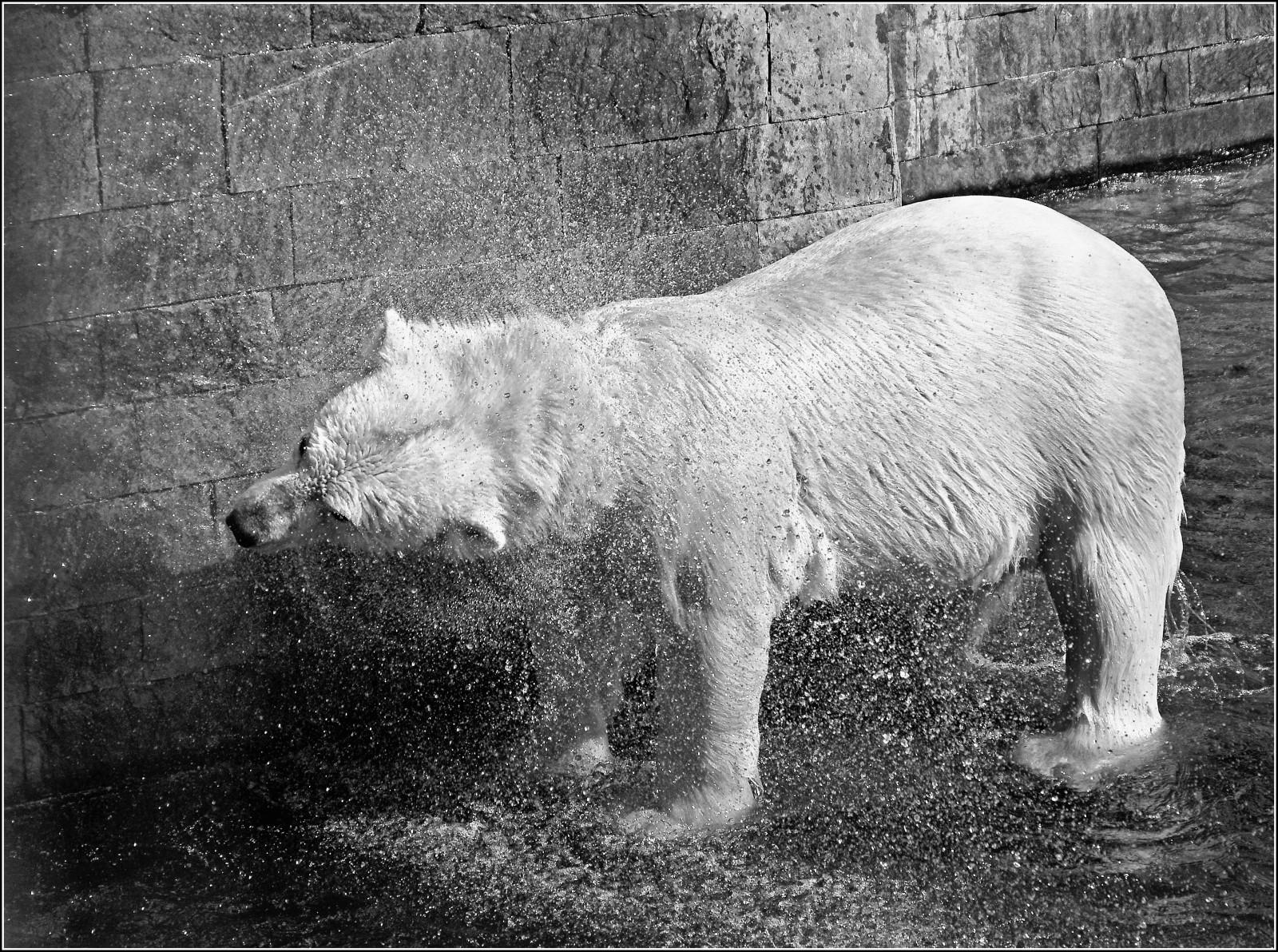 tundra animals arctic tundra wolf animal world pinterest arctic animals tundra