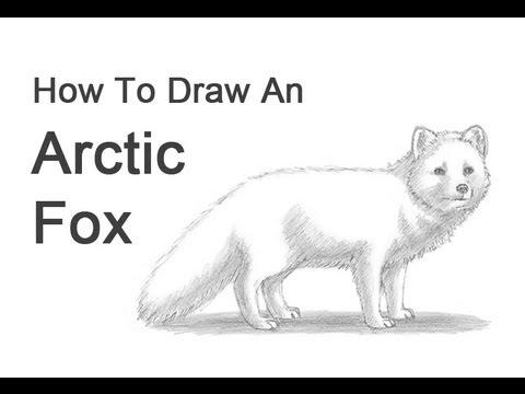 tundra animals how to draw an arctic fox youtube tundra animals