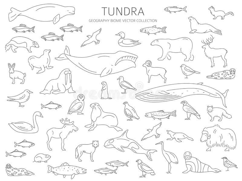 tundra animals tundra animals drawing at getdrawingscom free for tundra animals