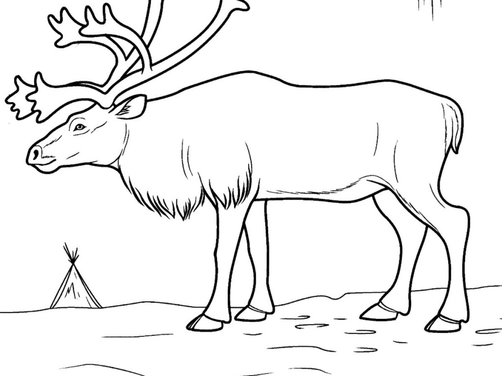 tundra animals tundra hog by mr author on deviantart animals tundra