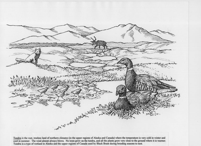tundra coloring pages 1000 images about native american unit on pinterest tundra pages coloring