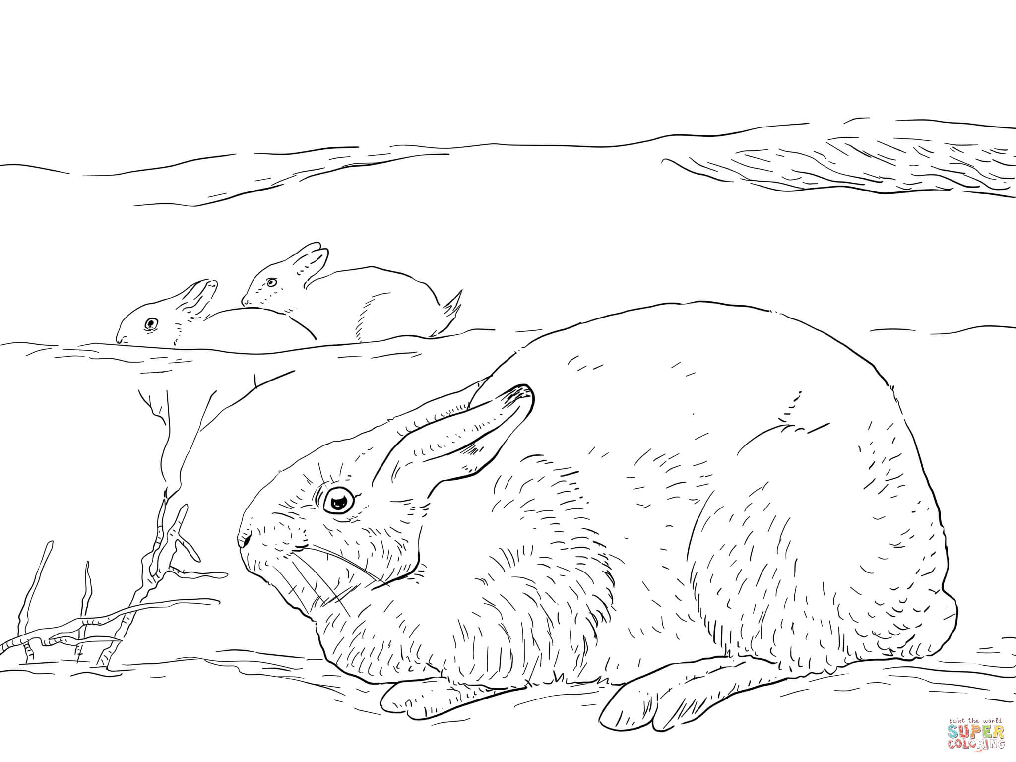tundra coloring pages arctic tundra plants coloring pages food ideas pages tundra coloring