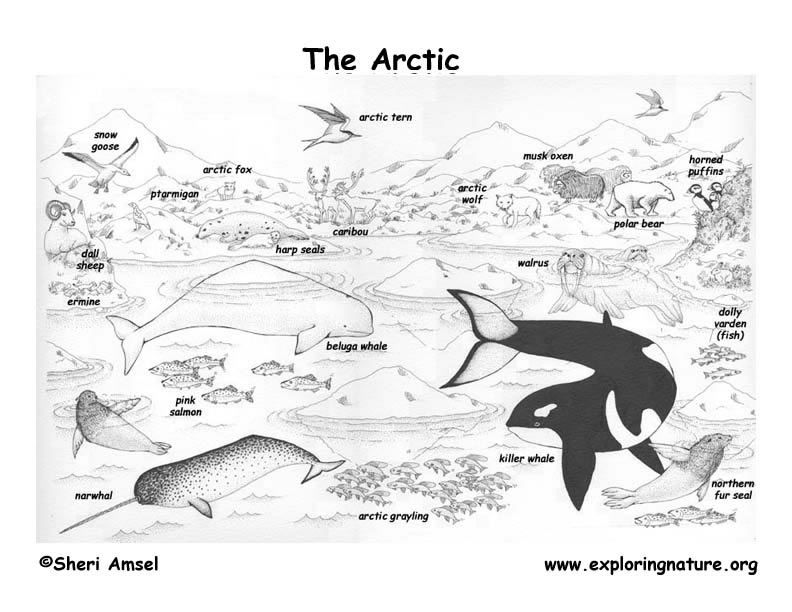 tundra coloring pages tundra coloring download tundra coloring for free 2019 tundra coloring pages