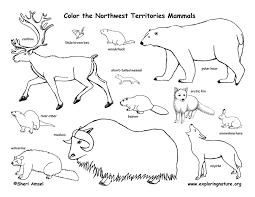 tundra coloring pages tundra coloring pages coloring home tundra coloring pages