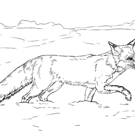 tundra coloring pages tundra coloring sheets coloring pages coloring pages tundra