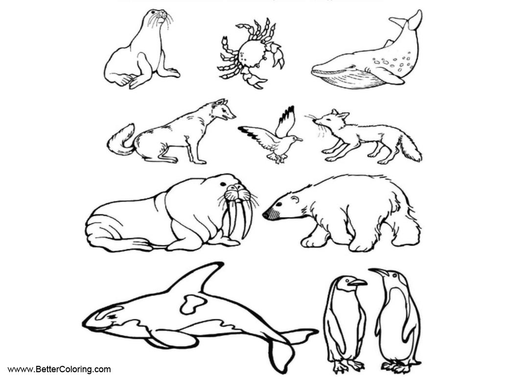 tundra coloring pages tundra habitat coloring coloring pages tundra pages coloring