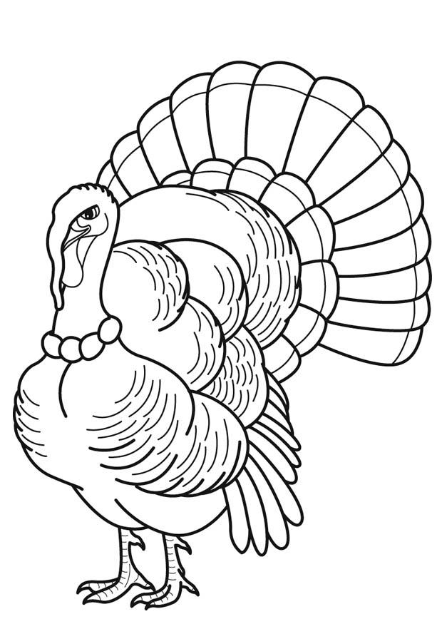 turkeys to color cool thanksgiving turkey coloring page free printable to turkeys color