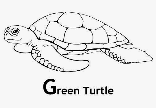 turtle pictures for coloring rules of the jungle printable picture of a turtle for coloring pictures turtle