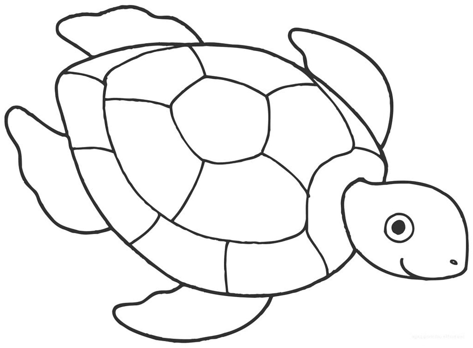 turtle pictures for coloring turtles to color for kids turtles kids coloring pages coloring for turtle pictures