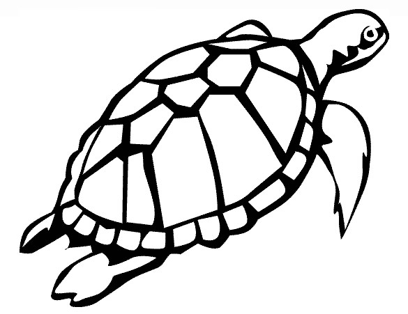 turtle pictures to print 19 turtle templates crafts colouring pages free to turtle print pictures