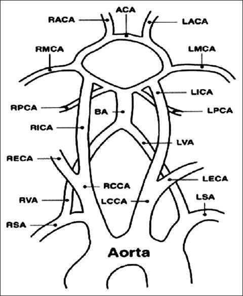 ultrasound anatomy coloring book neck mass radiology key anatomy book ultrasound coloring