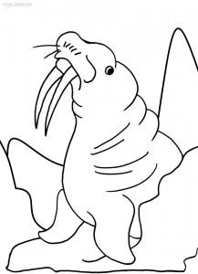 walrus coloring pages walrus coloring pages free coloring pages coloring walrus pages