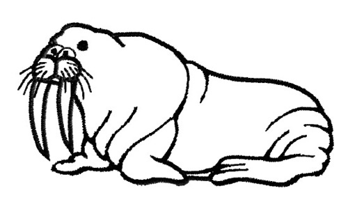 walrus pictures to print smiling walrus coloring page supercoloringcom to pictures print walrus