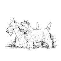 westie coloring pages 1000 images about scottie dogs clip art graphics line westie pages coloring