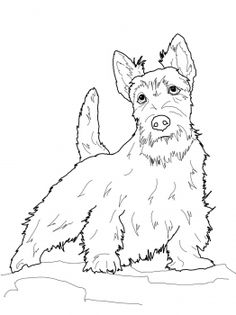 westie coloring pages carin terrier doc zentangle drawings dog coloring page westie pages coloring
