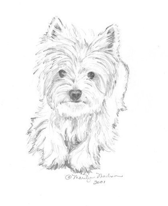 westie coloring pages how to draw a westie highland terrier sketch coloring page coloring westie pages
