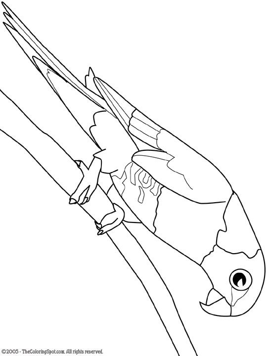 wild kratts coloring pages black and white caracal free coloring pages white pages coloring black kratts and wild