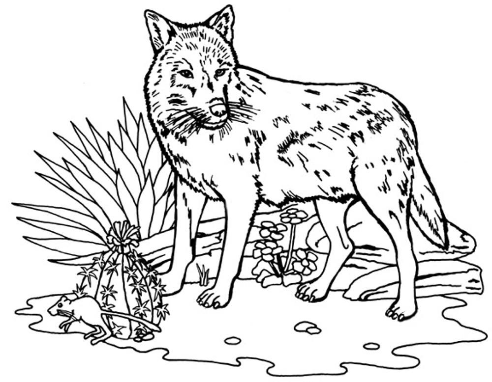 wolf coloring page print download wolf coloring pages theme coloring wolf page