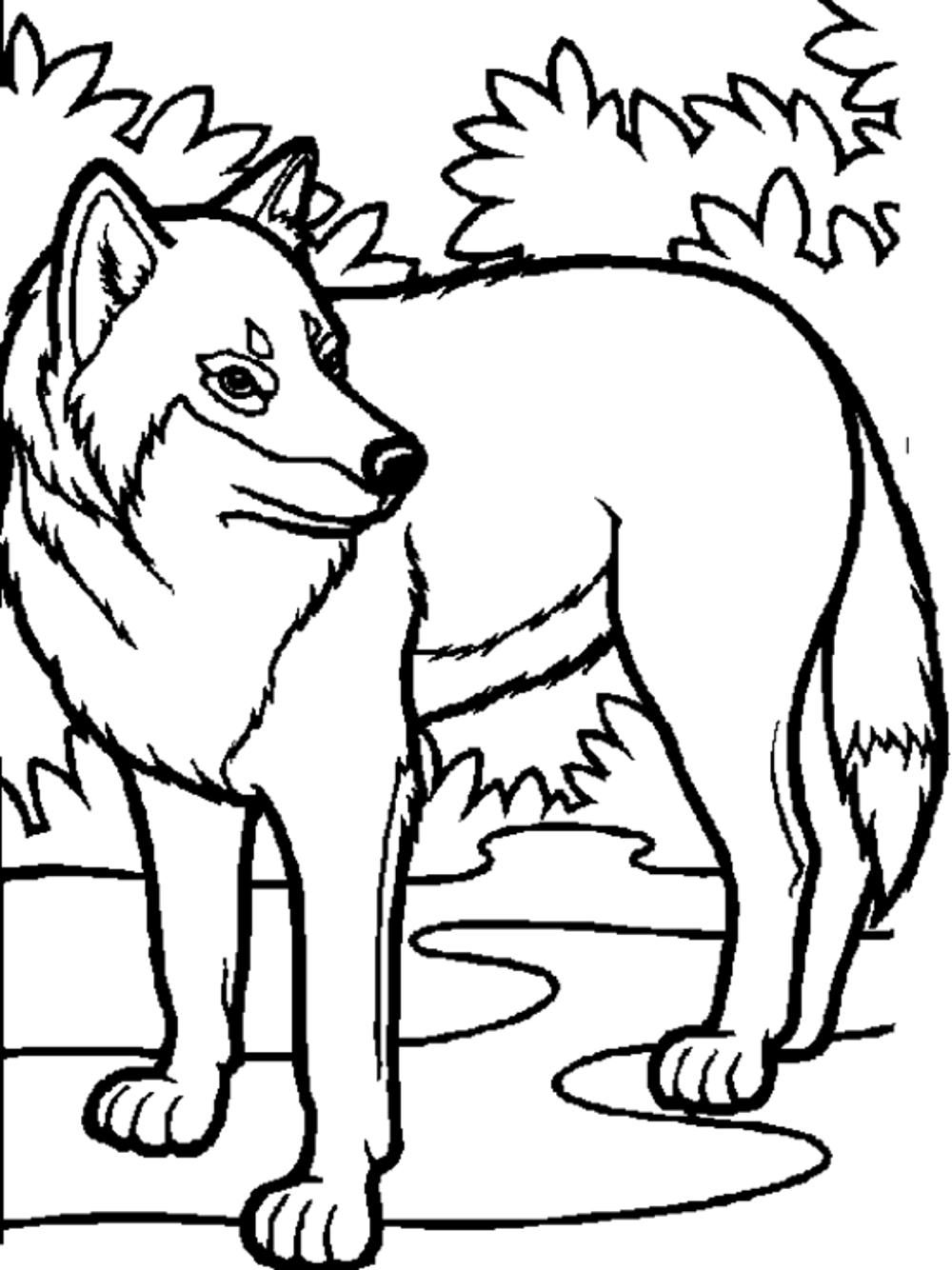 wolf coloring page print download wolf coloring pages theme wolf coloring page