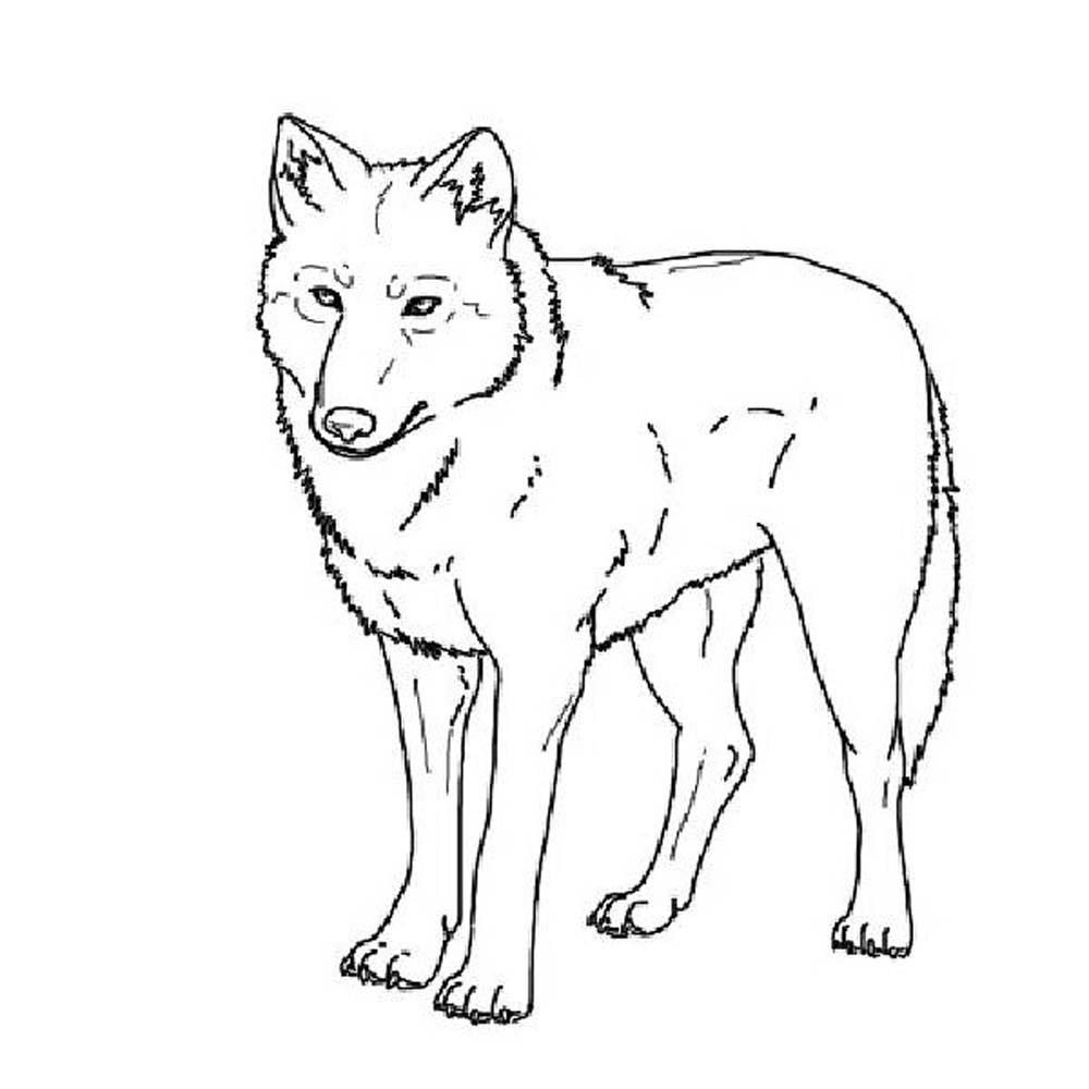 wolf coloring page print download wolf coloring pages theme wolf page coloring