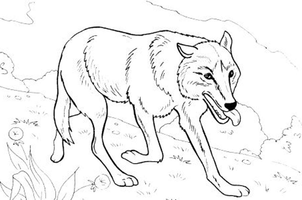 wolf coloring sheets print download wolf coloring pages theme sheets coloring wolf 1 1