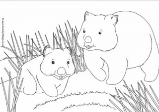 wombat colouring australian animal colouring pages colouring wombat