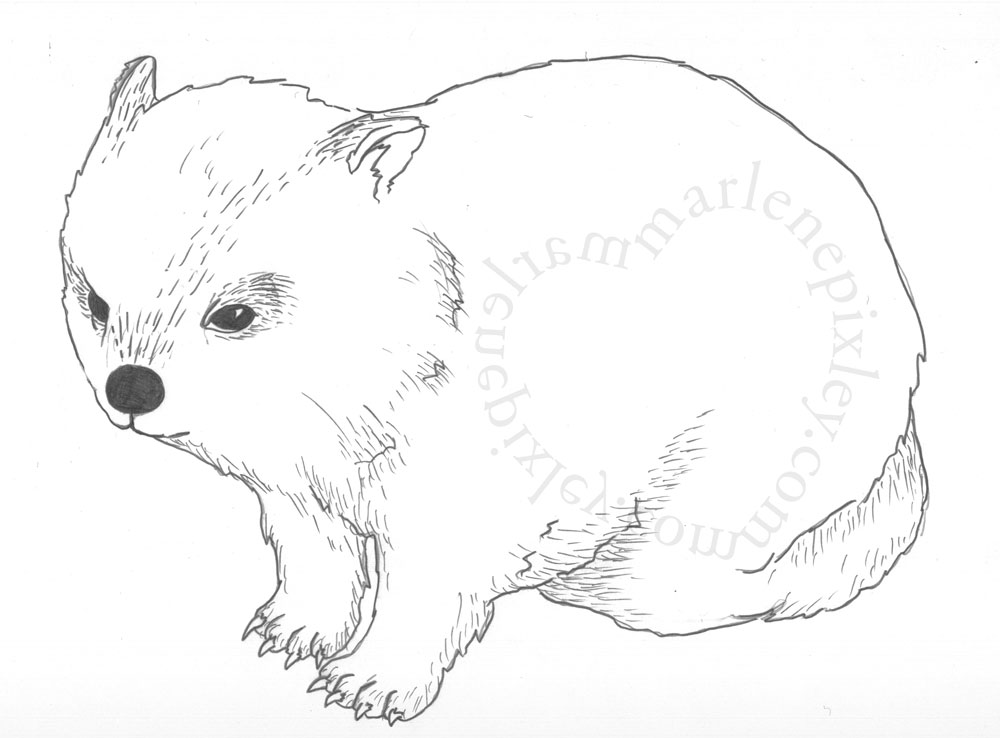 wombat colouring australian wombat coloring page free printable coloring wombat colouring