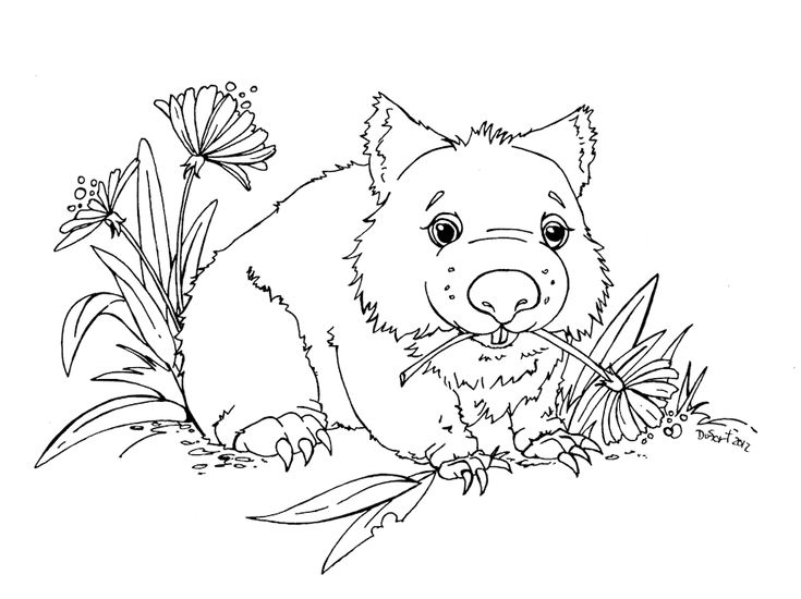 wombat colouring download picture wombat on animal picture society wombat colouring