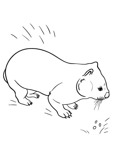 wombat colouring wombat coloring pages free coloring pages wombat colouring
