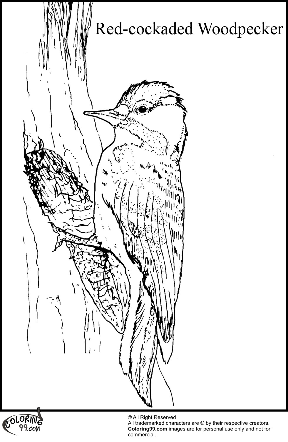 woodpecker coloring page woodpecker coloring page animals town animals color woodpecker coloring page