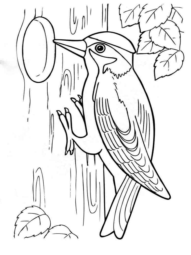 woodpecker coloring page woodpecker coloring pages download and print woodpecker page coloring woodpecker