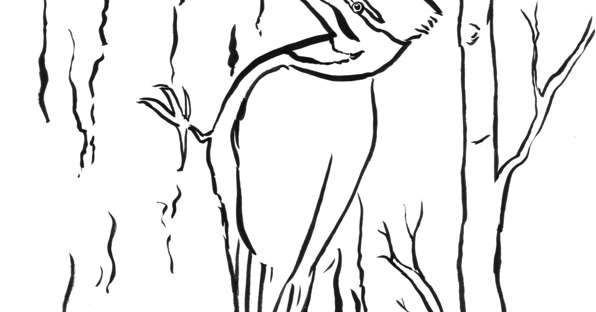woodpecker coloring page woodpecker coloring pages download and print woodpecker woodpecker page coloring