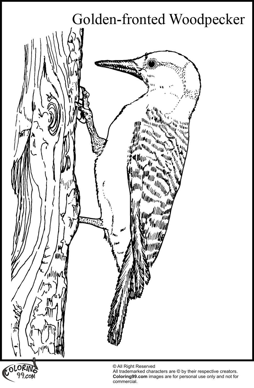 woodpecker coloring page woodpecker coloring pages team colors coloring page woodpecker