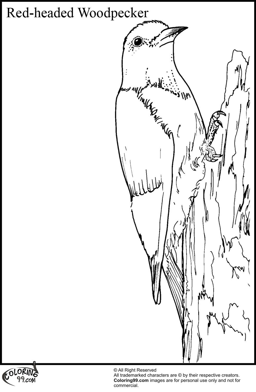 woodpecker coloring page woodpecker coloring pages team colors page coloring woodpecker