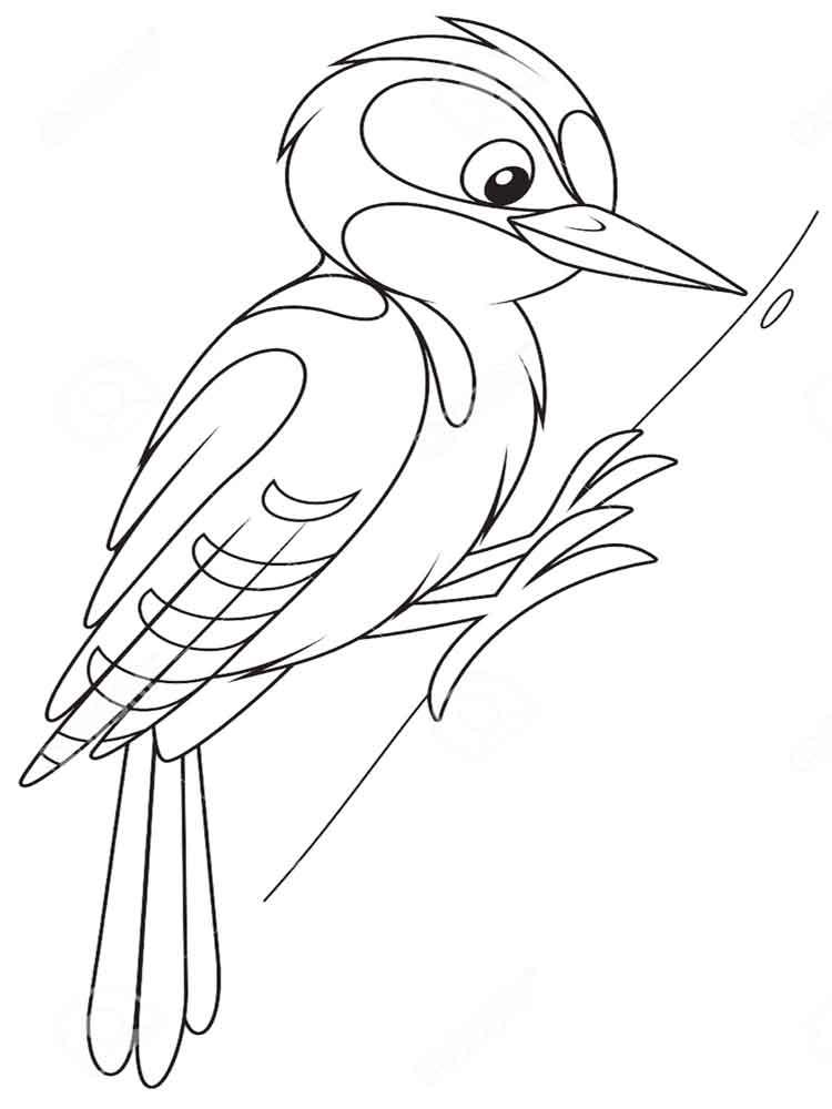 woodpecker coloring page woodpecker coloring pages team colors page woodpecker coloring 1 1