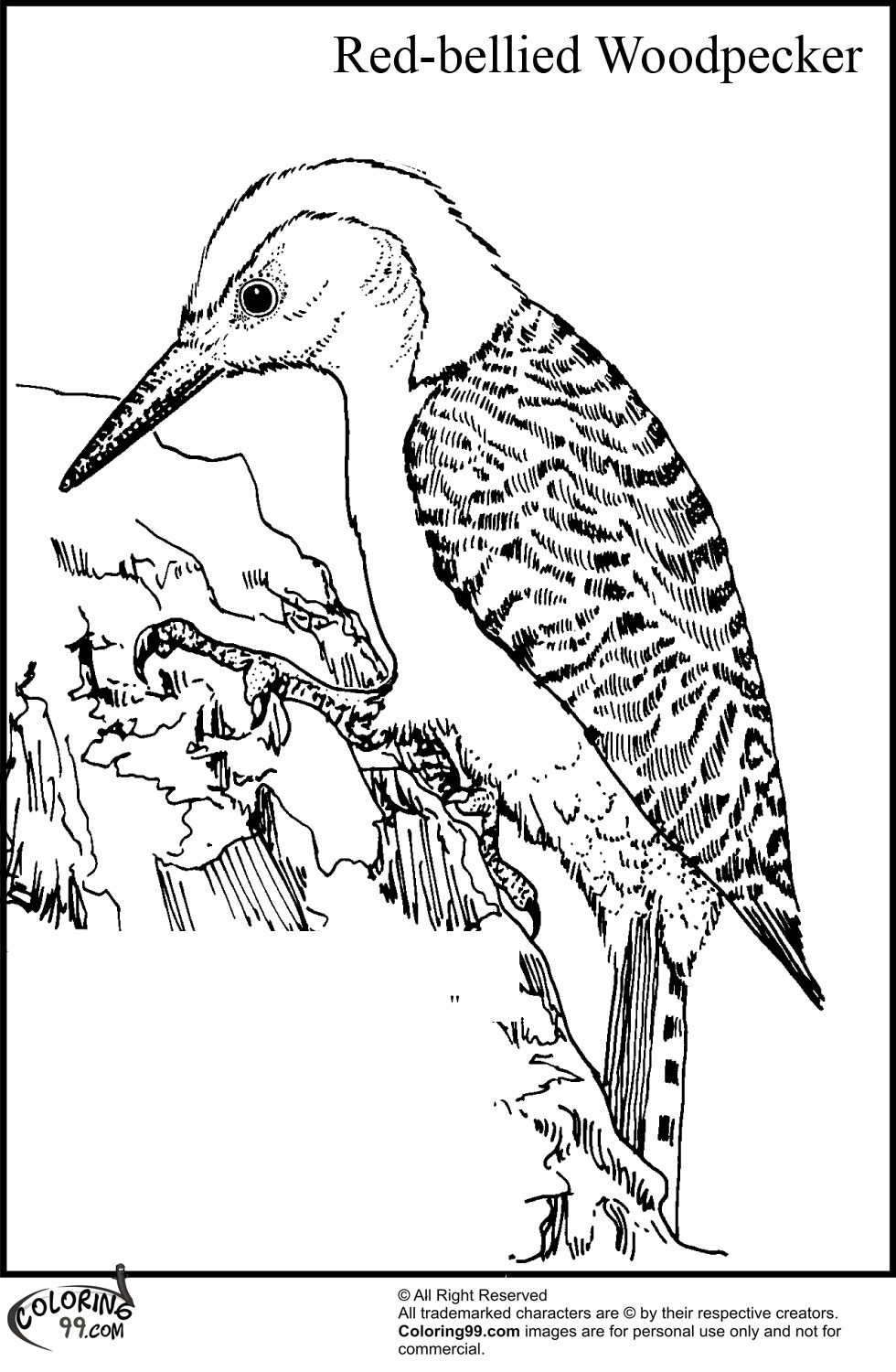 woodpecker coloring page woodpecker coloring pages team colors woodpecker coloring page
