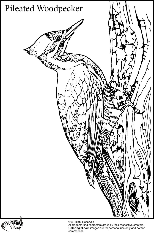 woodpecker coloring page woodpecker coloring pages team colors woodpecker coloring page 1 1