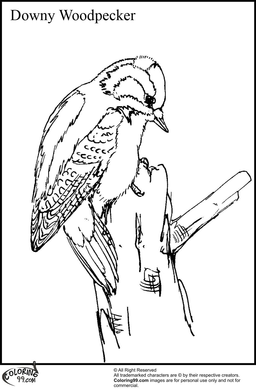 woodpecker coloring page woodpecker coloring pages team colors woodpecker page coloring