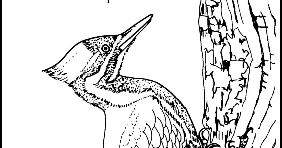 woodpecker coloring page woodpecker coloring pages team colors woodpecker page coloring 1 1