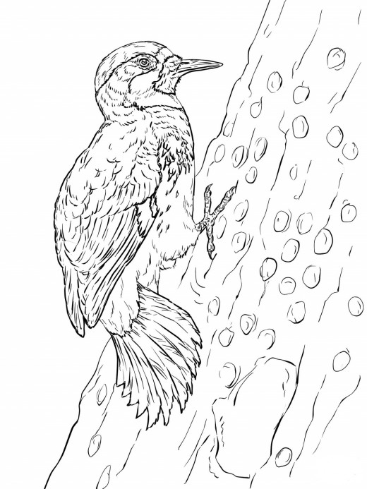 woodpecker coloring page woody woodpecker coloring pages cartoon coloring pages coloring page woodpecker