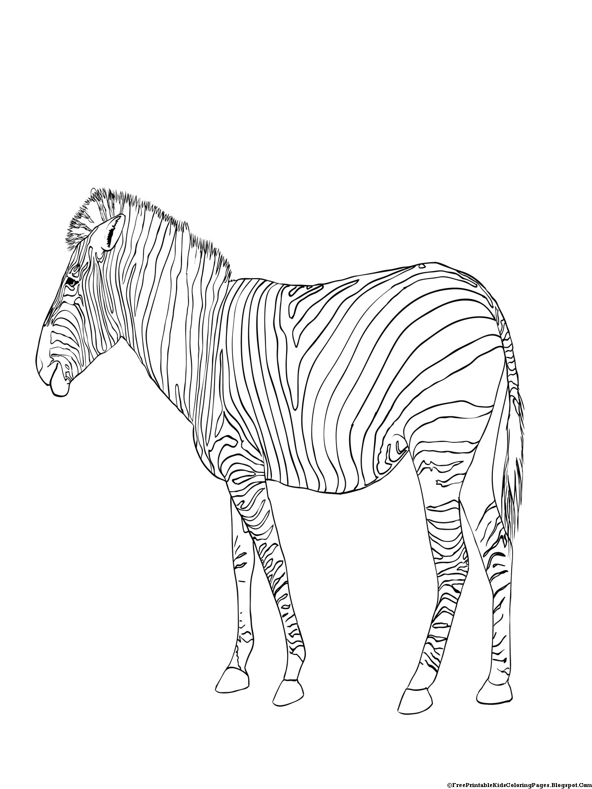 zebra coloring pages free printable free printable zebra coloring pages for kids pages printable free zebra coloring