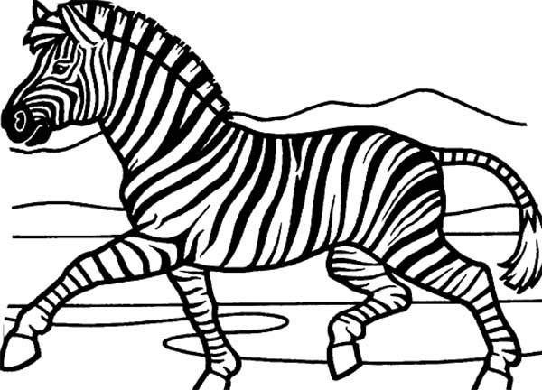 zebra coloring pages free printable zebra 6 coloring page free printable coloring pages zebra pages coloring free printable