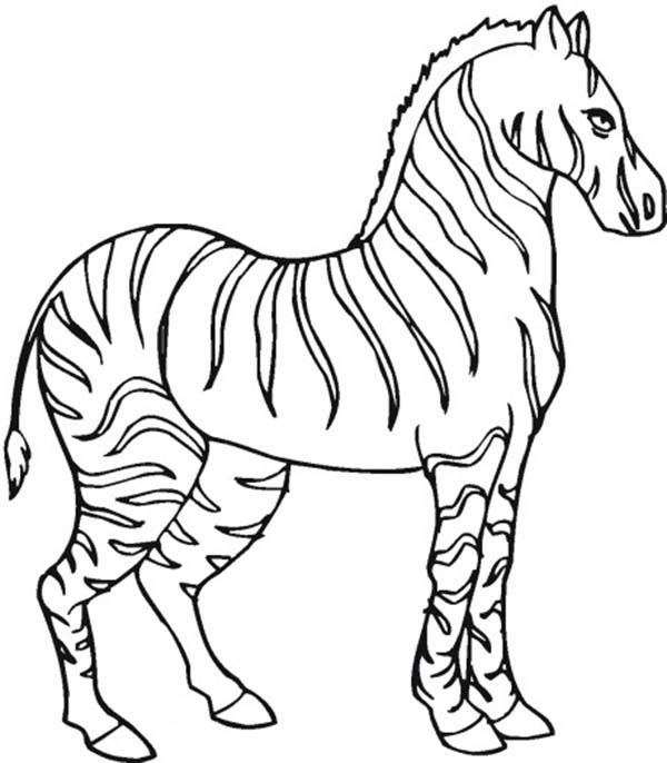 zebra pictures to colour zebra coloring pages learny kids colour pictures to zebra